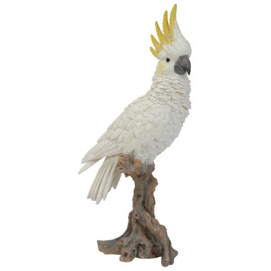 Alle bedrijven online vogels pagina 90 - Beeld van decoratie ...
