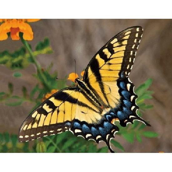 geel oranje insecten