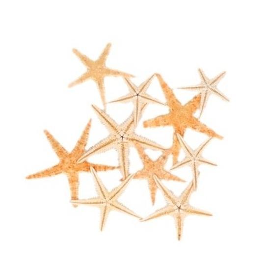 Feest decoratie zeesterretjes 10 stuks
