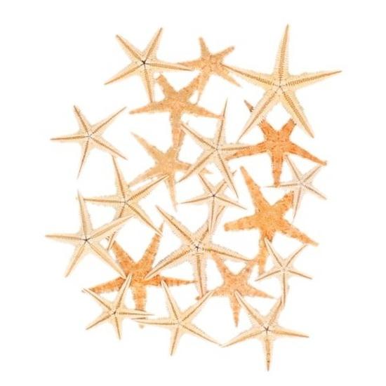 Feest decoratie zeesterretjes 20 stuks